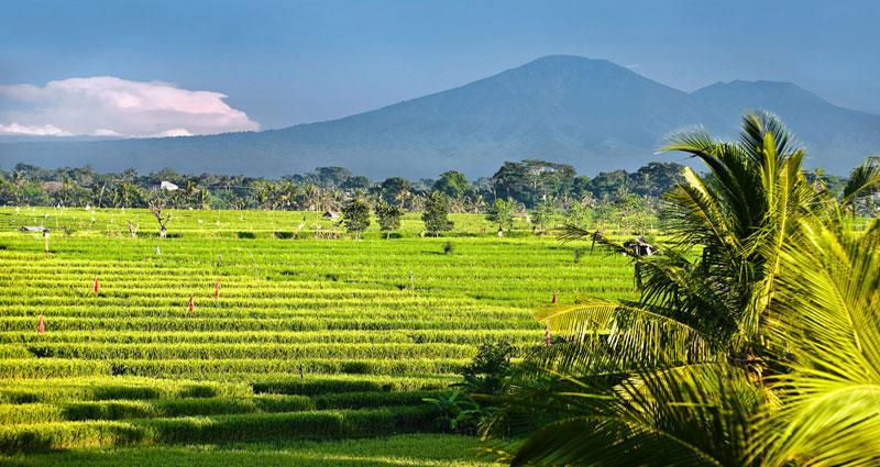 Villa vacacional en alquiler en Bali - Canggu - Canggu - Villa 236 - 3