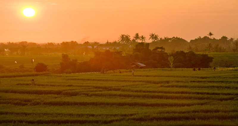 Villa vacacional en alquiler en Bali - Canggu - Canggu - Villa 236 - 14