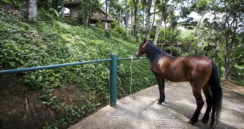 Villa vacacional en alquiler en Venezuela - Estado Miranda - El cedrito - Villa 486 - 25